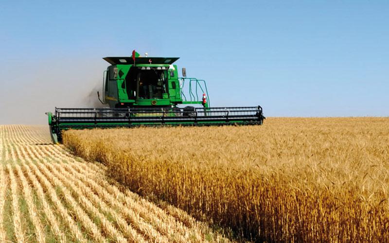 موسم الحبوب 2020-2021: محصول جيد جدا يقدر بـ 103,2 مليون قنطار
